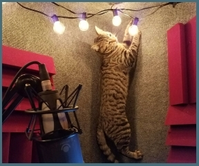 Greta the cat climbs the vocal booth.